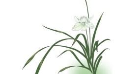 Green Orchid Vector Illustration