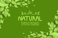 Green Natural Leaves Background Vector