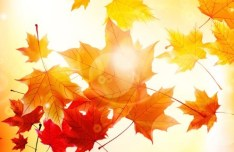 Fall Maples Leaves Vector