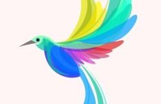 Colorful Summer Bird Vector Illustration