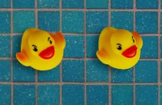 Rubber Duck PSD Template