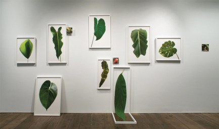 """Installation view, """"Leaf Wall"""", Archival Inkjet Prints on Rag Paper, 2015. Courtesy of the Artist."""