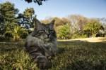 Il mondo segreto dei felini
