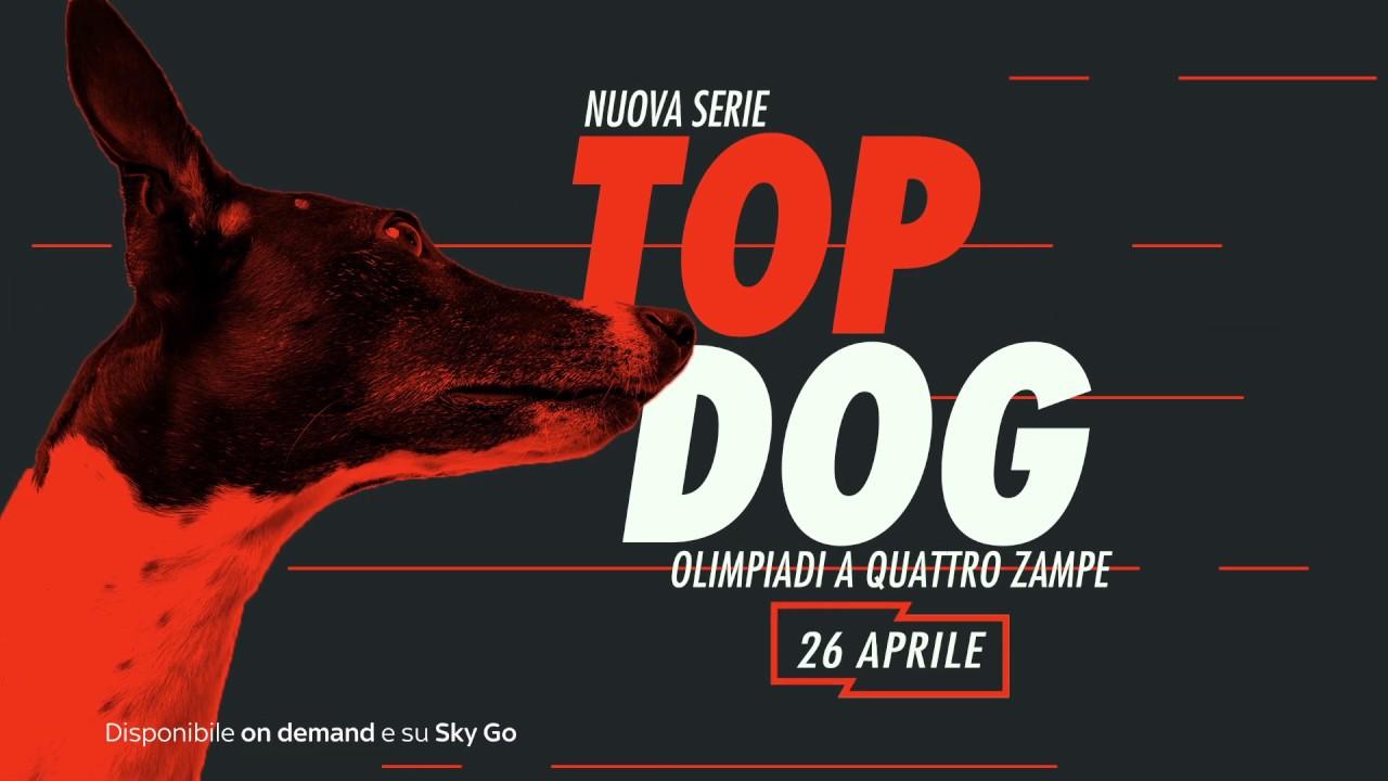 Top Dog: Olimpiadi a 4 zampe, su Blaze il reality con i cani protagonisti
