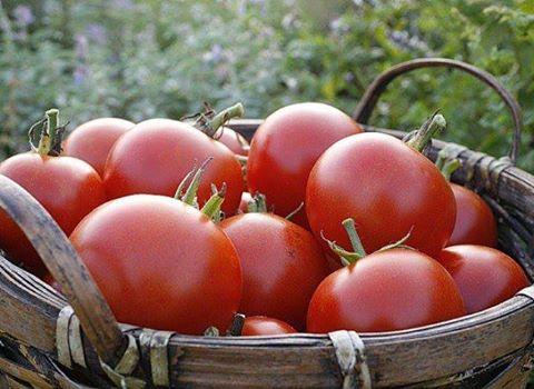 Un SDF : 4 mois de prison pour le vol de 19 tomates