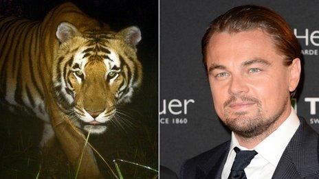 La star hollywoodienne Leonardo DiCaprio a fait don de 1,900,000 euro pour aider à sauver des tigres au Népal