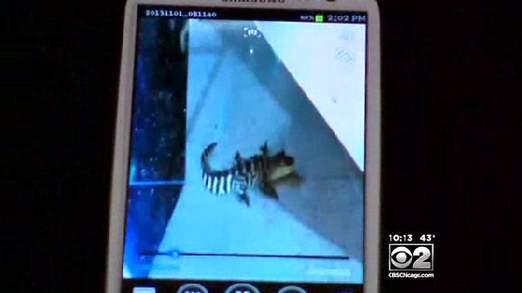 Un voyageur a pris le reptile en photo grâce a son appareil mobile