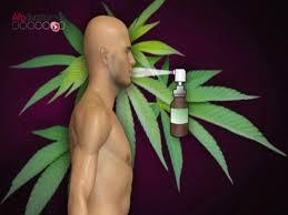 Sativex: un médicament dérivé du cannabis a été autorisé en France
