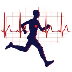 Le coeur comme toutes les cellules ont besoin d'un effort physique