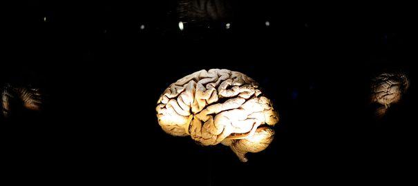 Un ver retrouvé dans un cerveau