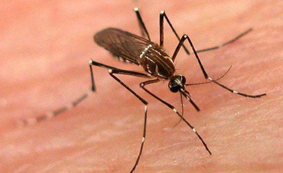 siddha Medicine for Dengue