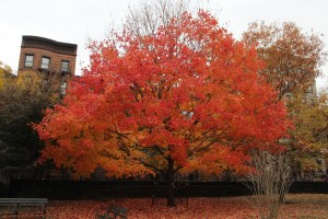 Fall Marcus Garvey Park_4 - 1