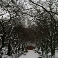 Winter in Central Park_200