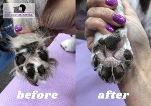 Trimming the Pads on Your Dogs Feet to Prevent Snow and Ice Balls TLC Dog Grooming