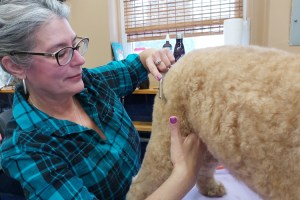 Combing a Double Coated Breed with Terrie Crawford