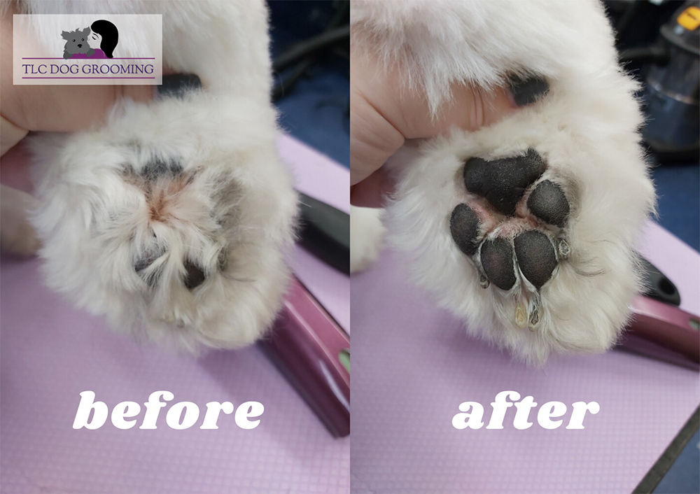 Before and After Trimming Your Dogs Feet