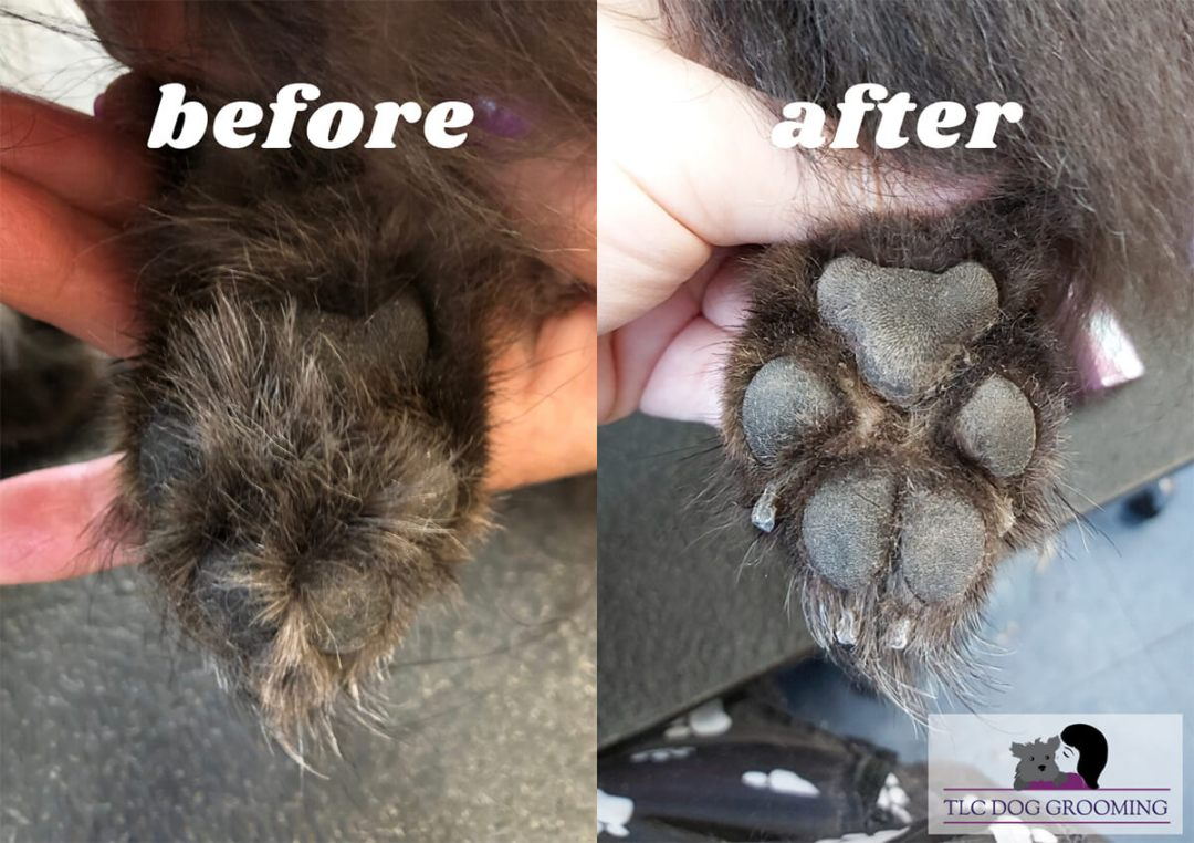 Before and After a Paw Trim at TLC Dog Grooming