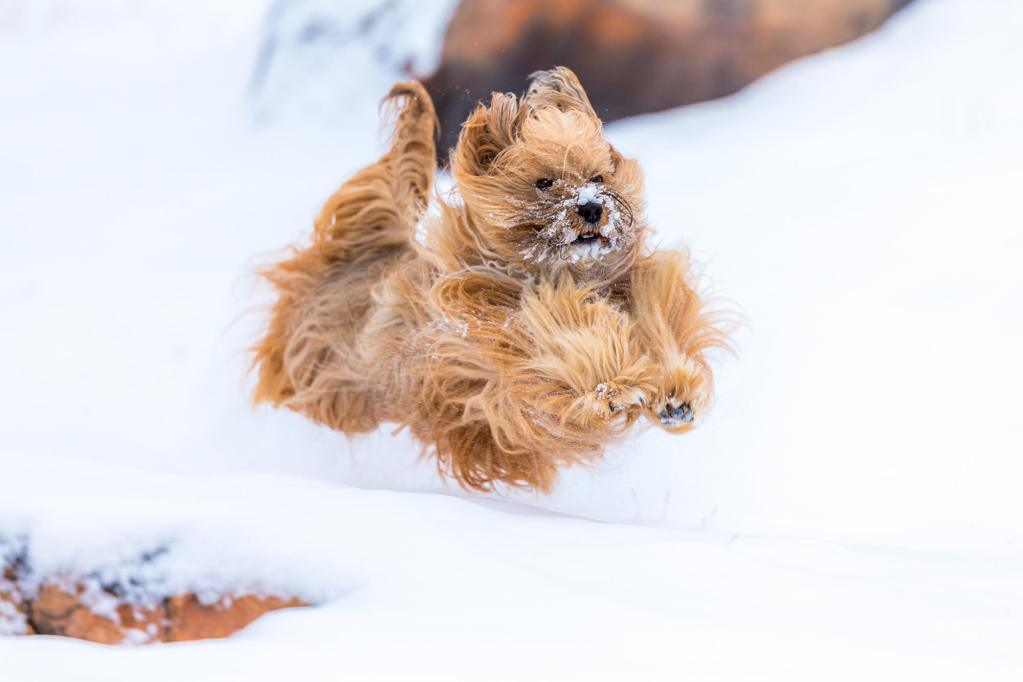 Protect Your Dogs Feet from Snow and Ice Balls in Winter with TLC Dog Grooming