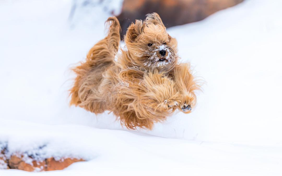How to Prevent Snow and Ice Balls in Your Dog's Feet!