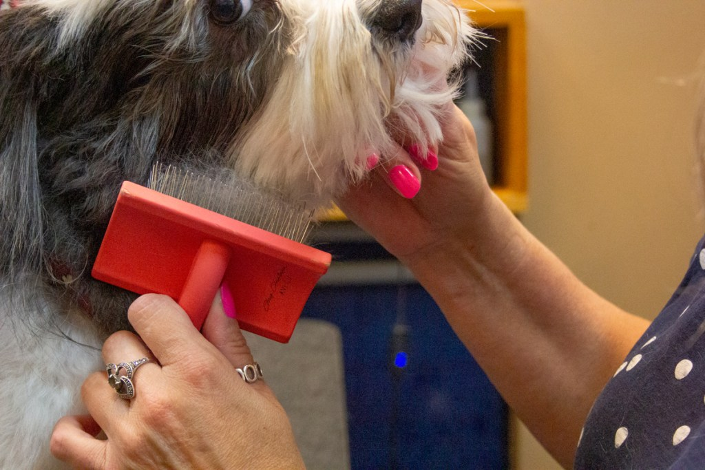 Brushing and Combing your Dogs Face with TLC Dog Grooming