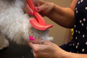 Slicker Brush for Dogs