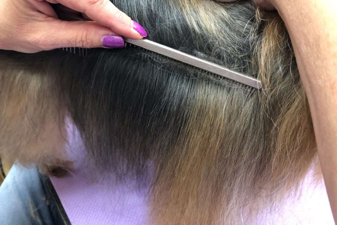 Combing through a dogs hair with TLC Dog Grooming