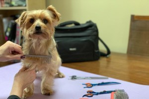 Combing Your Small Breed at Home with TLC Dog Grooming