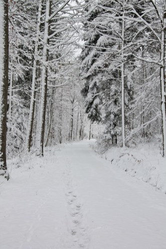 Winter 2015/2016 in Schöntal