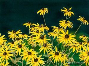 Daisies : Watercolor by David G Jones
