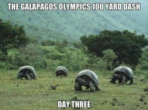 Galapagos Olympics 100 Yard Dash - Day 3