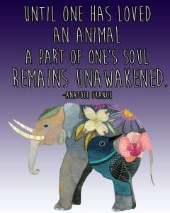 """Until one has loved an animal, a part of one's soul remains unawakened."" -Anatole France"