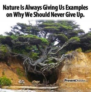 Nature is always giving us examples on why we should never give up.