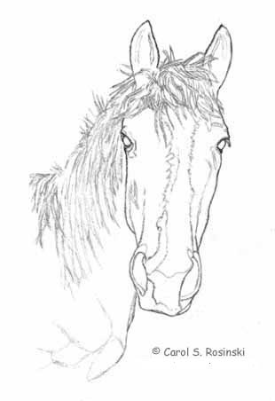 Draw a horse part one outline drawing and first shading how to draw a horse part one pic one ccuart Images