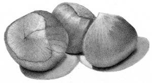 Hazelnuts