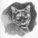 Cat Sketch Step Four