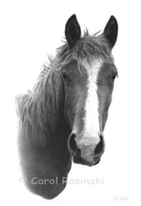 Horse Drawing To Download