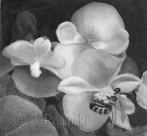 Bee on Begonia step three by C. Rosinski