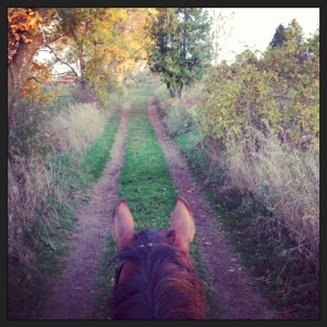 One of My Favourite Views....from the Back of One of My Horses