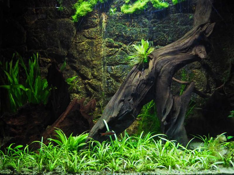 Aquarium mit Pflanzen und Wurzel