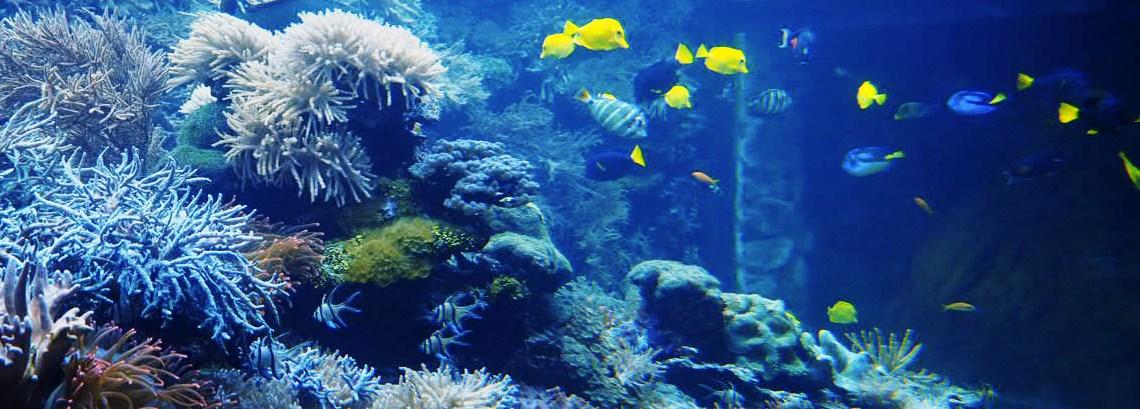 Korallenaquarium mit unterschiedlichen blauen und gelben Fischen