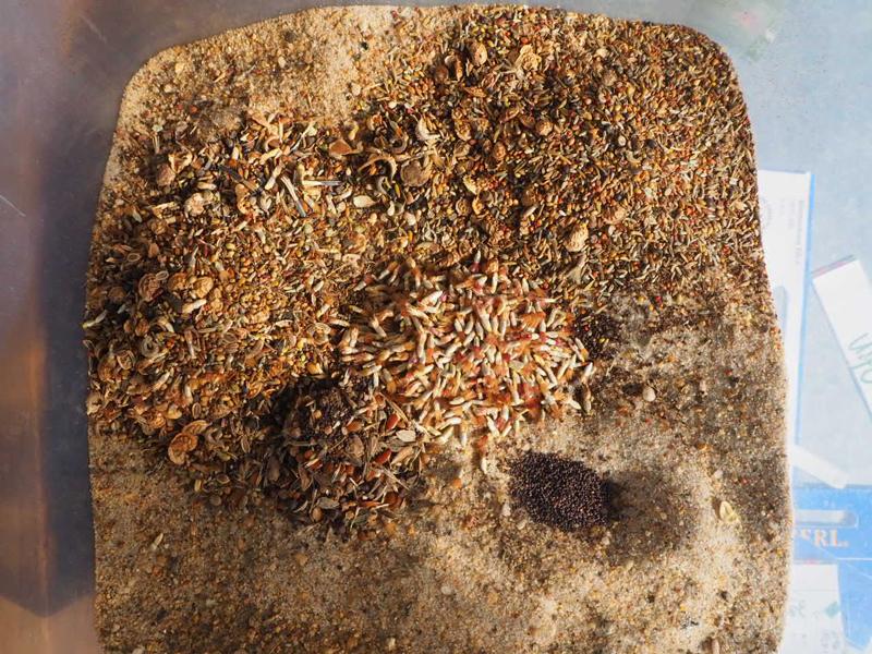 Samen auf Sand