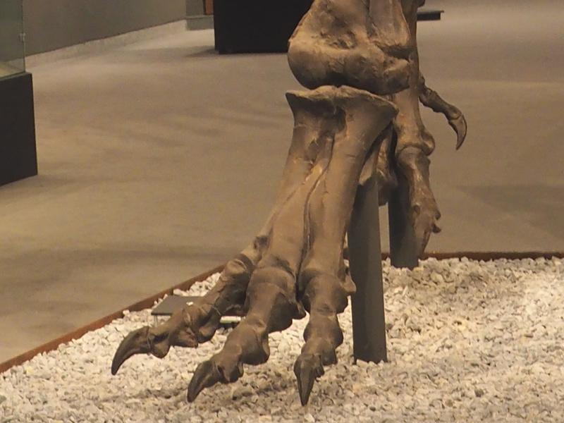 Tyrannosaurus Fuß Münster