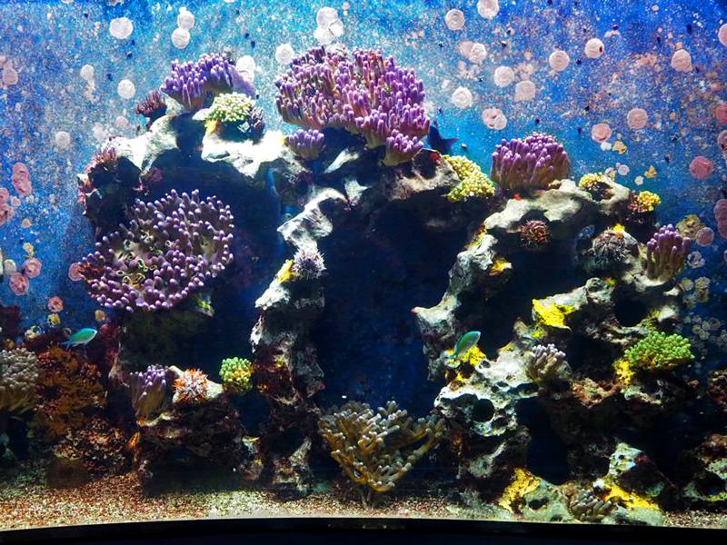 Das Aquarium ist voller Leben