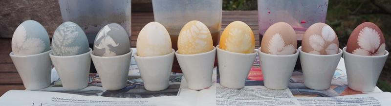 9 Eier in drei verschiedenen Farben und Farbintensitäten vor den Bechern mit dem Färbesud