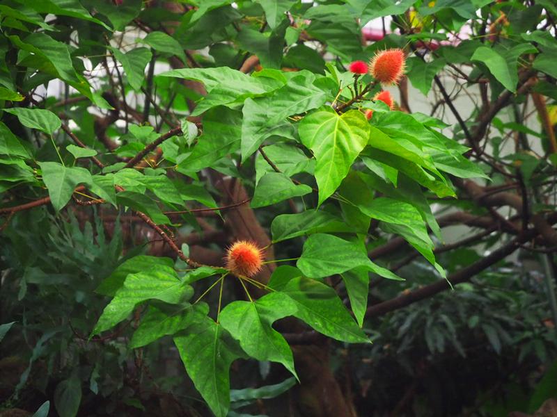 unbekannter Baum mit roter Frucht (?)
