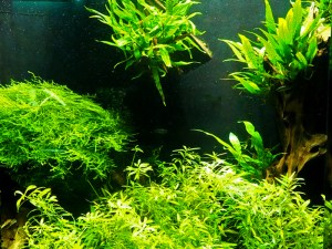 Aquarium mit Holz und Aufsitzerpflanzen