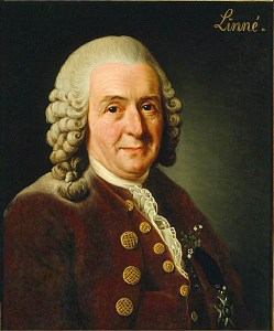 Carl von Linné nach einem Gemälde von Alexander Roslin