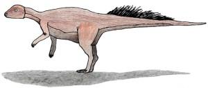 Micropachycephalosaurus hongtuyanensis, IJ Reid, CC 3.0