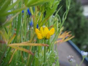 Gelbe Blume im Blumenkasten