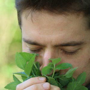 Aromatherapie und ätherische Öle